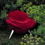 Rose Chair, Edra at Strot